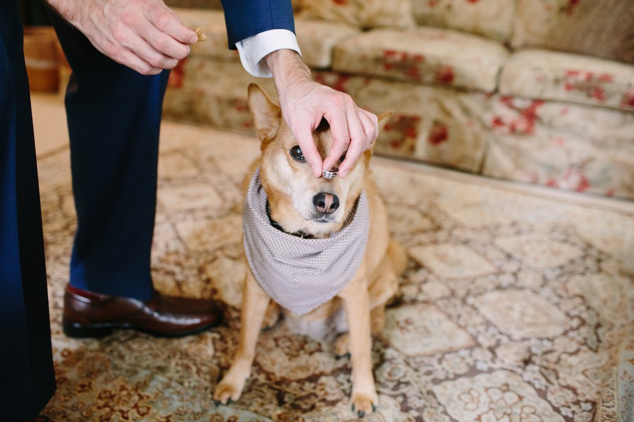 dog with wedding rings at dorset inn wedding